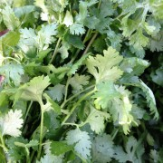 Cilantro grows well and year round in Hawaii